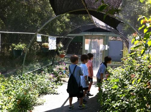 Den 3 at the Heard - Butterfly Garden2